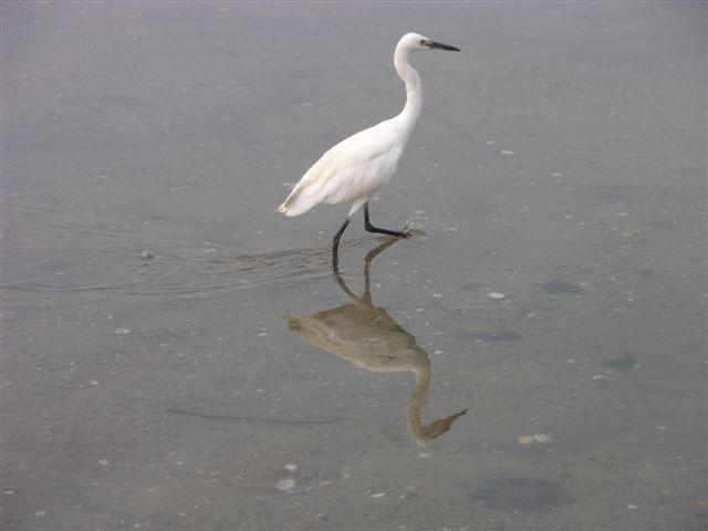 Bird at Miyajima island