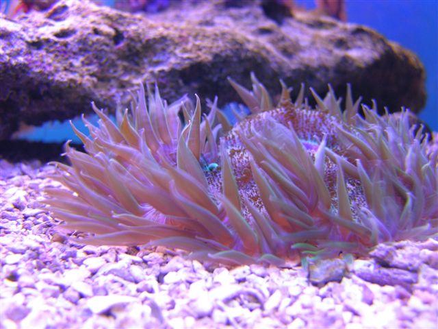 Aquarium at John Pennenkamp