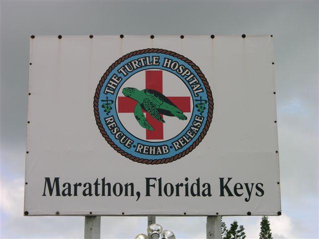 Turtle Hospital in Marathon, FL