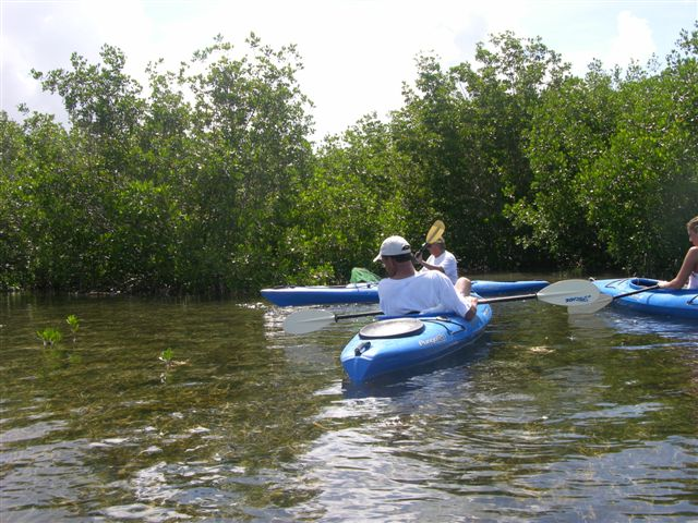Entering the mangrove